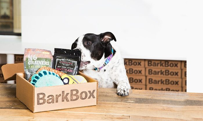 A Bark Box sits open on a table with treats and toys visible inside. A black and white dog has its paws on the table and is sniffing the treats.
